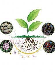 λιπάσματα Φυτοnet